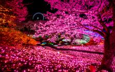 関東最大級のイルミネーション「さがみ湖イルミリオン」が圧巻の一言