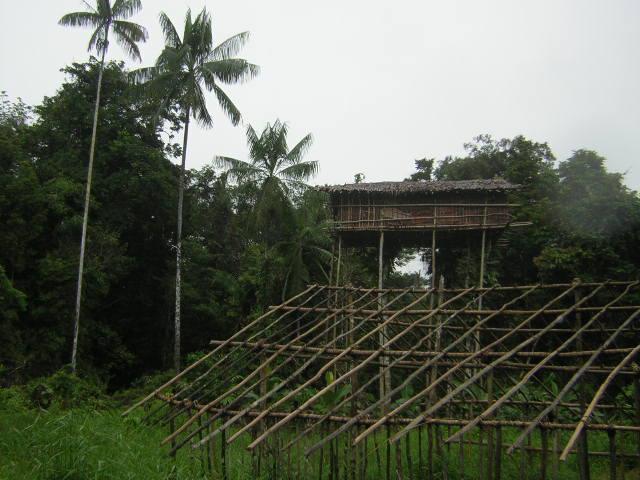 パぷわニューギニア