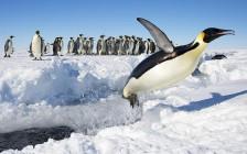 蒼く、白く、美しく光り輝く。最後の大陸「南極」の絶景を捉えた写真10選