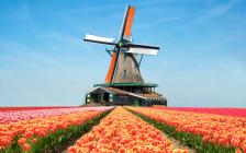 世界一の遊園地からミッフィーの故郷までオランダの観光スポット30選