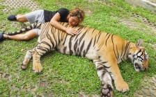 プーケットのタイガーキングダムで念願のトラとご対面!