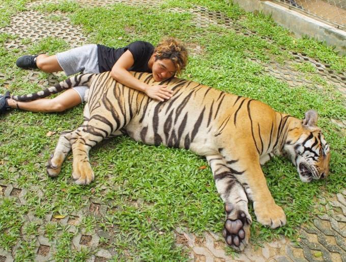 念願の「トラ」とご対面!タイ・プーケットのタイガーキングダムに行ってきた