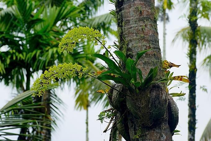サイパン熱帯植物園
