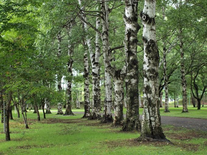 緑ヶ丘公園(緑ヶ丘)