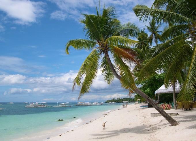 Alona_Beach_Palmtree