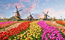 オランダの治安は?物価は?オランダ旅行の基本情報まとめ