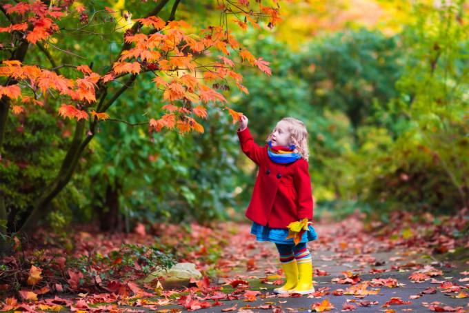 紅葉や秋を表現する英語フレーズ24選