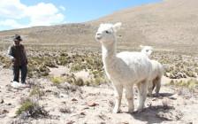 ペルーの山奥「チバイ村」で食べたスープ料理が恐ろしすぎる