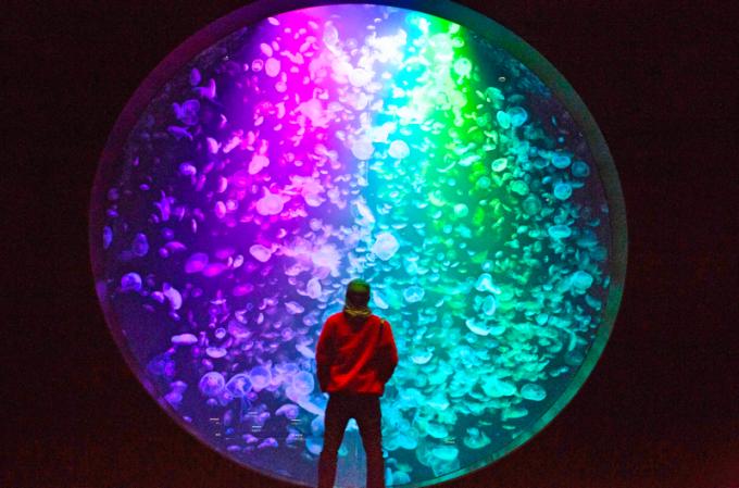 「いらない」と言われた山形県の水族館。奇跡をもたらしたクラゲの物語とは