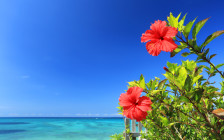 沖縄旅行でおすすめのお土産30選