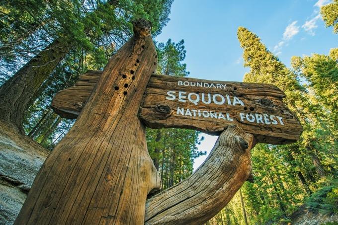 セコイア国立公園はどんな場所?