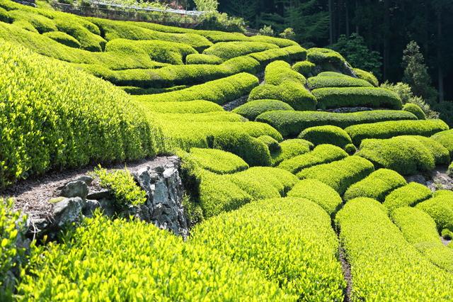 日本で8地域が指定されている「世界農業遺産」とは