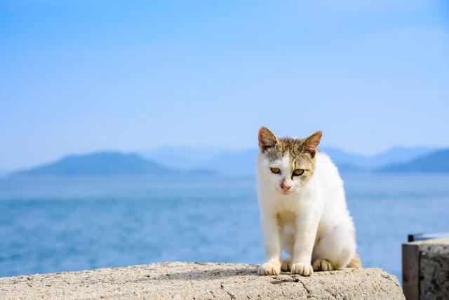 猫の島、佐柳島の基本情報まとめ