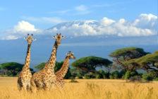 アフリカ観光で自然体験! ケニアのおすすめ観光スポット12選