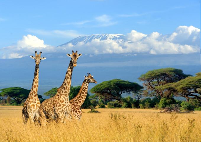 アフリカ観光で自然体験! ケニアのおすすめ観光スポット11選