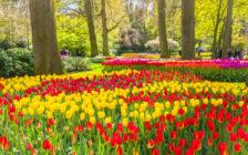 世界最大の花の楽園!オランダのキューケンホフ公園まとめ