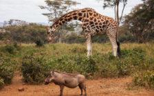 ケニアの首都ナイロビのおすすめ観光スポット15選