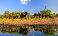 南アフリカ共和国の治安は?物価は?南アフリカ共和国旅行の基本情報まとめ