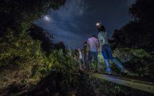 沖縄の秘境ジャングルを探検! 未公開のナイトツアーが想像を絶する大自然だった