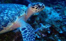 ダイバー憧れの島!「コスメル島」ダイビングの5つの魅力