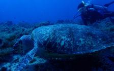 現地ガイドが教える!メキシコに浮かぶコスメル島のおすすめダイビングポイント5つ