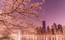 ニューヨークでおすすめの春のイベント5選