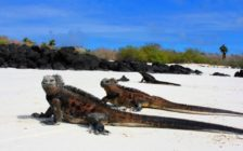 ガラパゴス諸島のおすすめ観光スポット15選