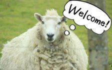 羊だけじゃなかった。ニュージーランドで出会った7種類の動物たち