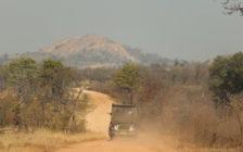 「次のデートは南アフリカ!」カップルで行くライオンキングの世界はこんなにも楽しい