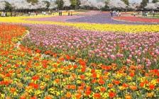 【春の花祭り開催中】四季の花々が咲き誇る、なばなの里