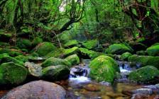 神秘の島「屋久島」の自然はこんなに凄い