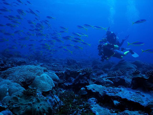 フェニックス諸島保護区
