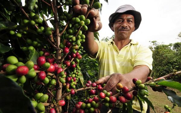 コーヒー生産の文化的景観