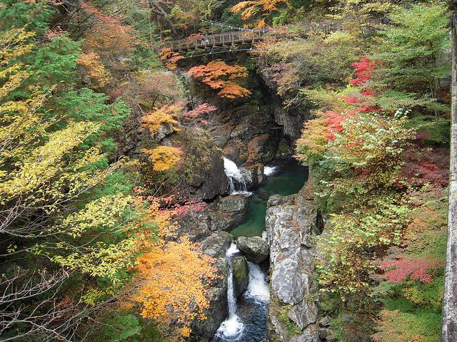 御手洗渓谷 - Mitarai ravine // 2010.11.14 - 36