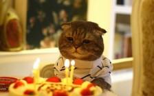 誕生日おめでとう!は英語で何て言う?オシャレな誕生日メッセージ50選