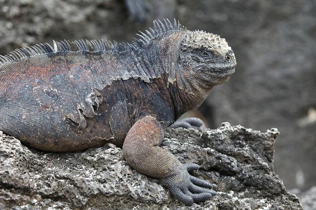 ガラパゴス諸島の画像 p1_36