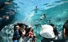 北海道の夏に行きたい観光スポット10選
