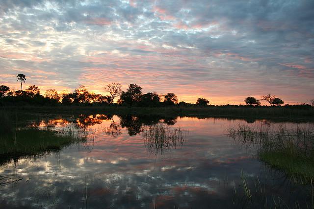 オカバンゴ・デルタの画像 p1_31