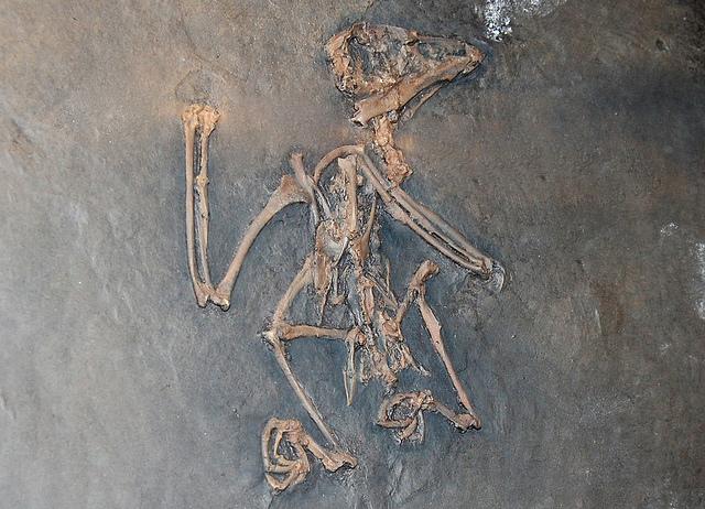 メッセル・ピットの化石地域