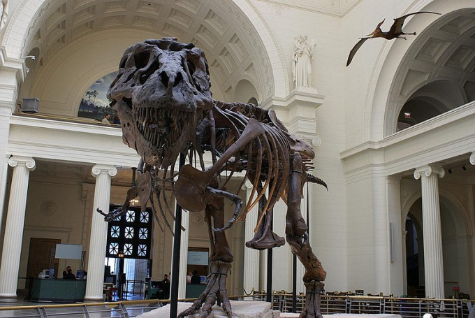 800px-Tyrannosaurus_rex_fossil_-Chicago_Field_Museum-6