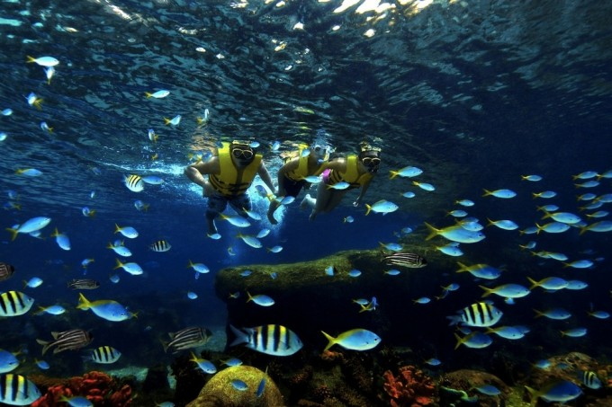 Adventure-Cove-Waterpark---Rainbow-Reef_54_990x660_201404232346
