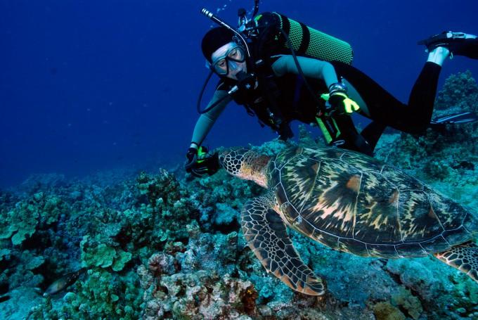 Diver-Turtle-1200