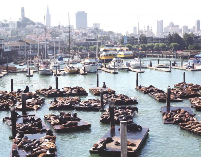 Sea-Lions-at-Fisherman's-Wharf