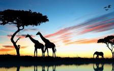 【動物好き必見】ケニアのマサイマラでライオンキングの世界を体感しよう