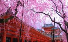 もう桜の季節ですね、今年は春を感じることのできる4月のイベントに行こう!