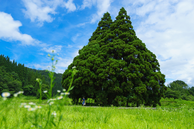 トトロに会える絶景も!山形県に行ったら訪れたい絶景9選