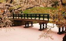 春だけの絶景!ピンク一面に桜が広がる弘前をご紹介!