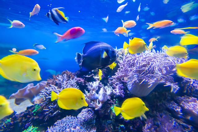 鮮やかな魚やサンゴに囲まれて空中散歩!「潜水艦ツアー」で世界の海を見に行こう
