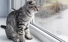 おもしろ英語イディオム10選!Cats and dogs=土砂降りって本当?