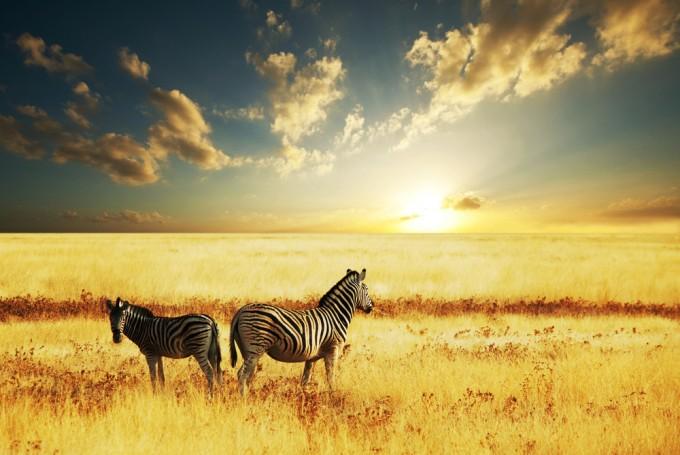 """危険なイメージが180°くつがえる!アフリカの約6分間の映像が""""生命力""""に溢れていた"""